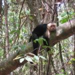 熱帯の蚊と猿に襲われる:マヌエル・アントニオ国立公園