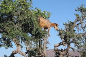 morocco-1327301_1280