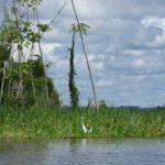 美しい生命力と危険を体験:イキトス発アマゾンツアー