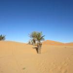 楽したい人は砂漠が見える宿に泊まろう:メルズーガ