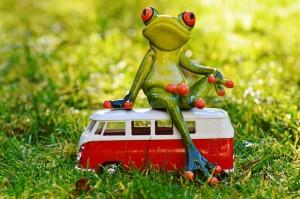 frog-1109777_640