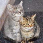 激太り猫は人懐っこくなるのか:5ヶ月ぶりの江田イン