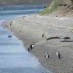 ペンギン&オタリオ観察ビーグル水道クルーズ:ウシュアイア